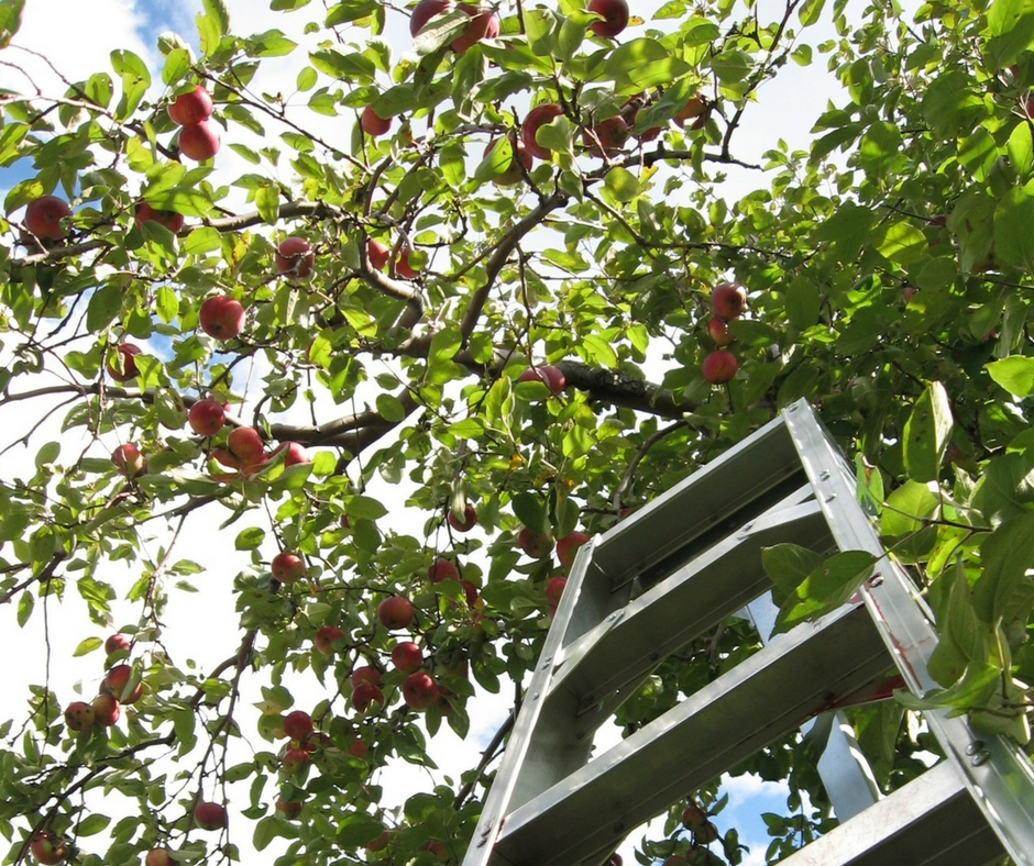 extension-ladder-in-tree.jpg
